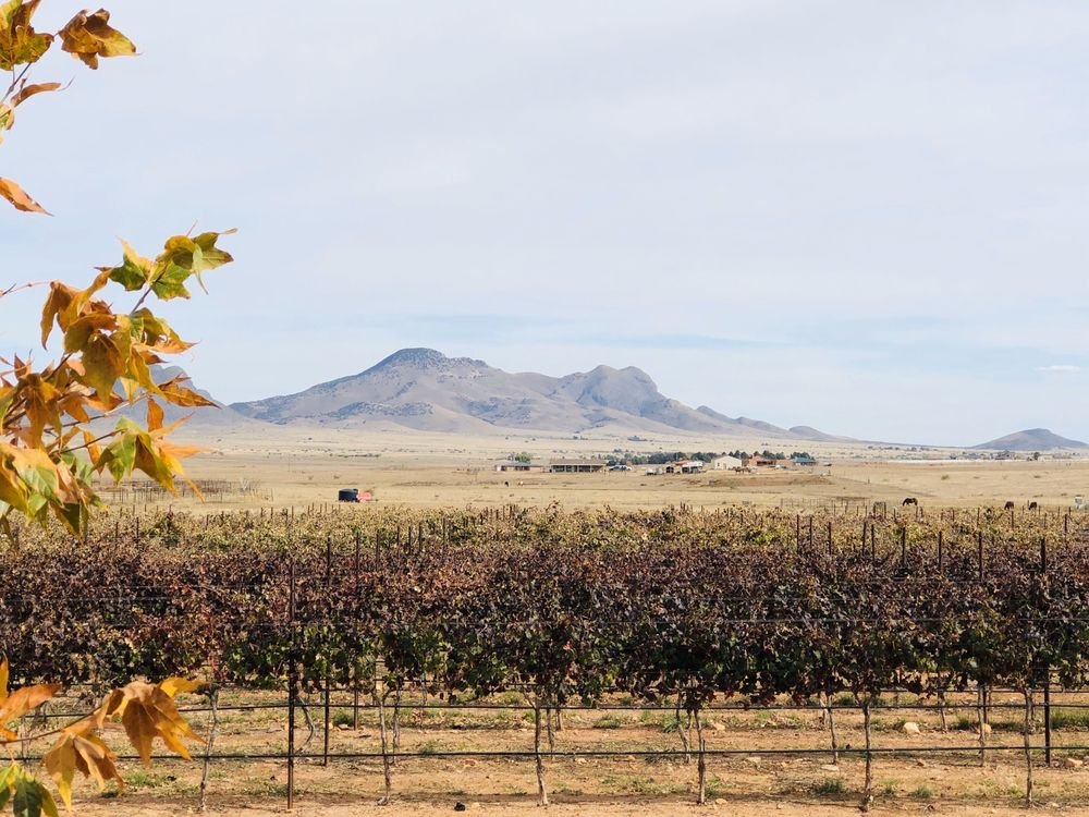 Wilhelm Family Vineyards: 21 Mountain Ranch Dr, Elgin, AZ