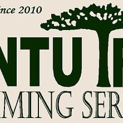 cantu tree trimming services tree surgeons killeen tx