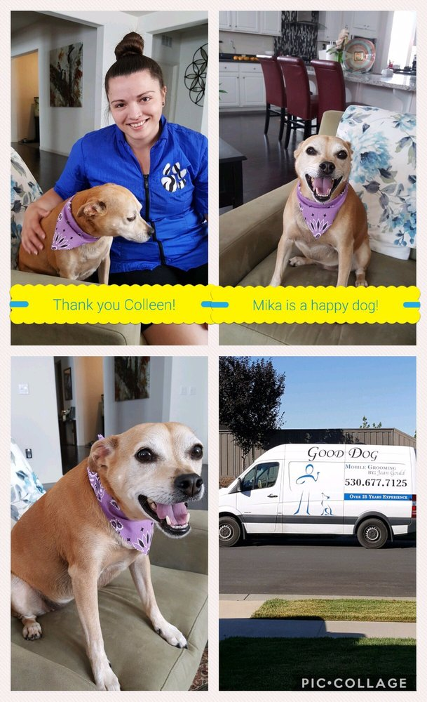 Good Dog Mobile Grooming: Rescue, CA