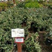 Star Nursery 96 Photos 87 Reviews Nurseries Gardening 8725 S Eastern Ave Southeast Las Vegas Nv Phone Number Last Updated December 17