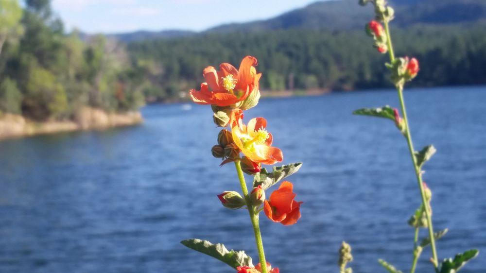 Lynx Lake: Walker Rd, Prescott, AZ