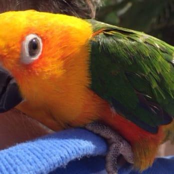 A Bird Farm - 23 Photos & 13 Reviews - Bird Shops - 1235 N Nellis