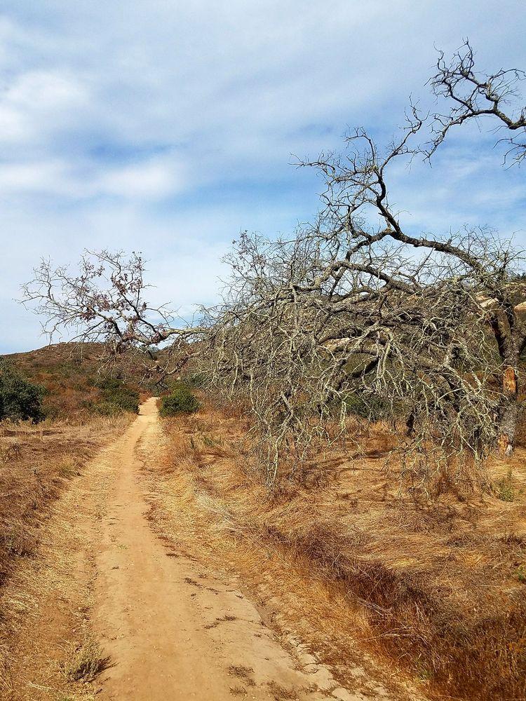 Cougar Ridge Trail: Escondido, CA