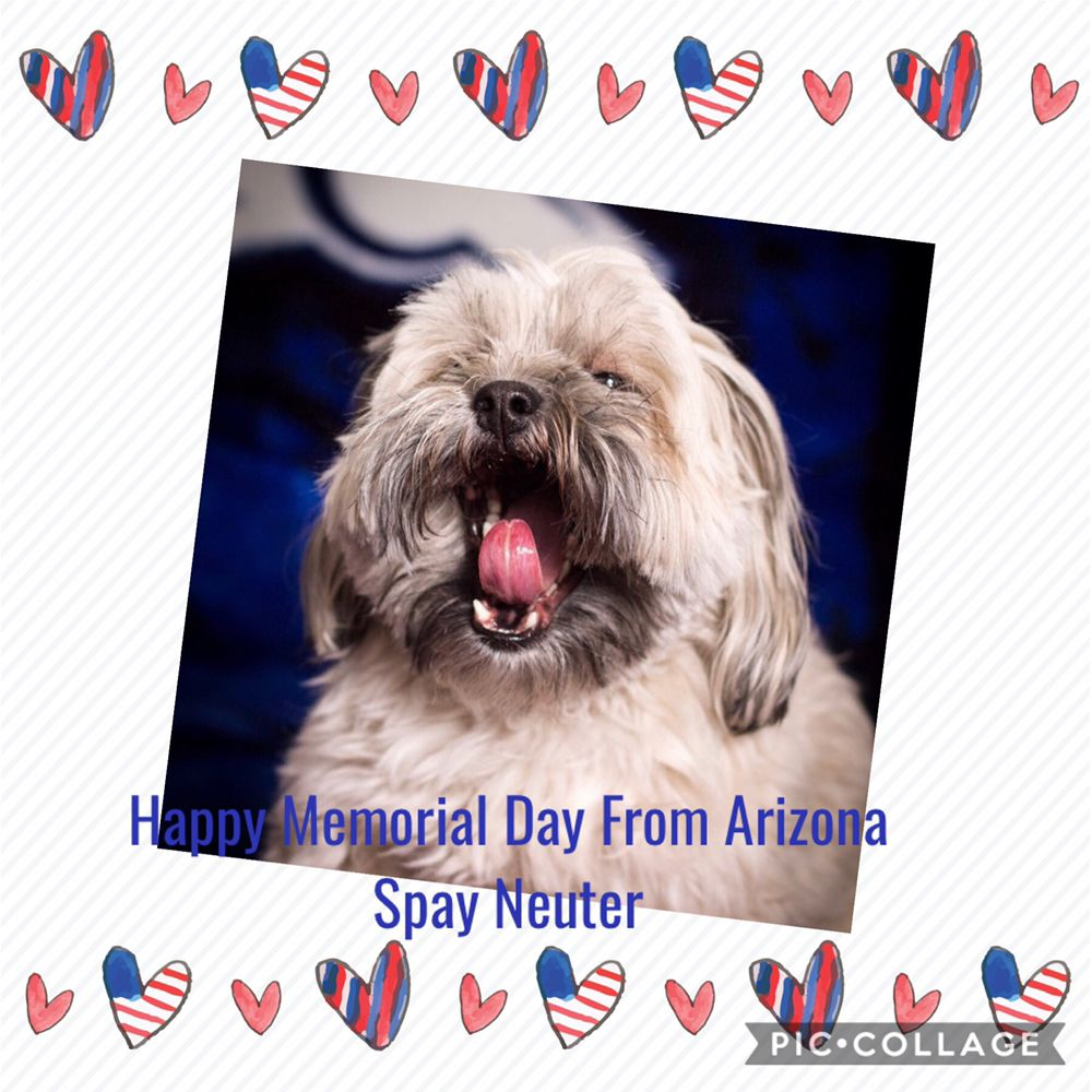 Arizona Spay & Neuter Clinic Your Low Cost Vet in Scottsdale