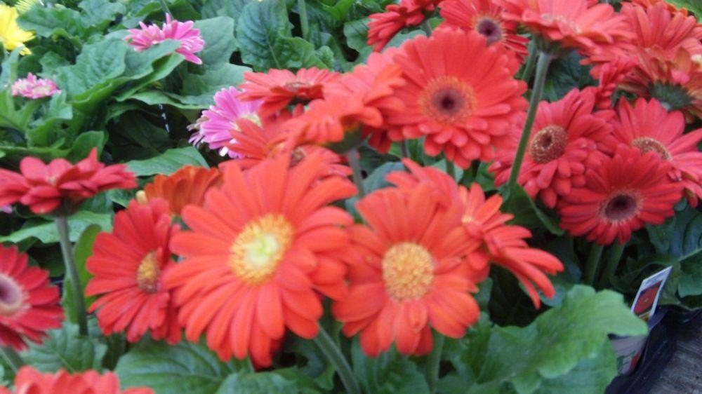 Frank Otte Nursery & Garden Center