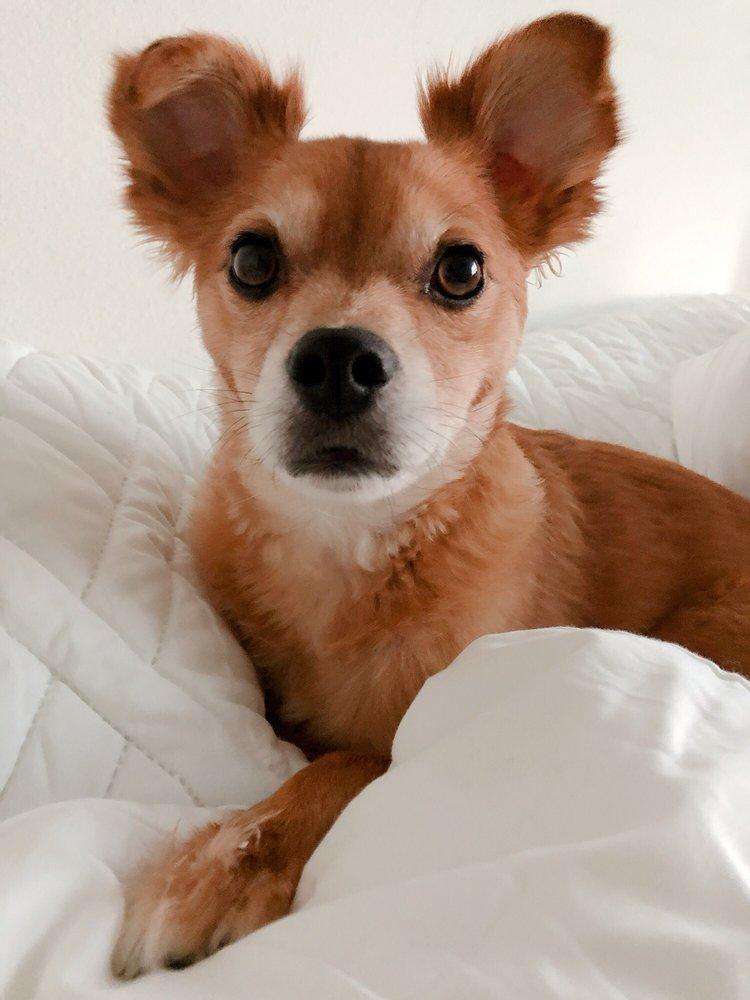 Puppy Luv: 1620 S 312th St, Federal Way, WA