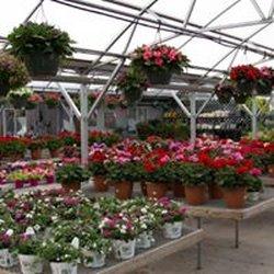 Lovell S Flowers Greenhouse Nursery 37 Photos 12 Reviews