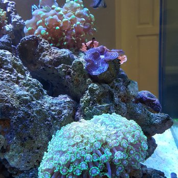 Conjunctivitis fish tank