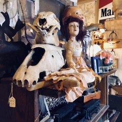 Photo Of Dolly Python Dallas Tx United States
