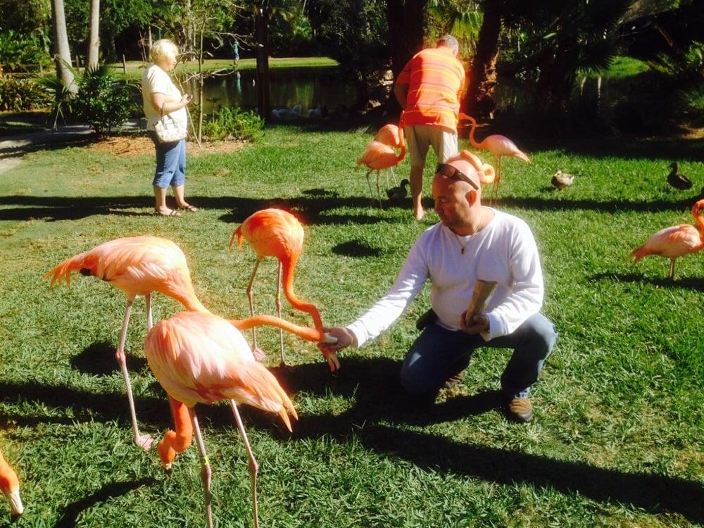 Flamingos Up Close And Personal Yelp