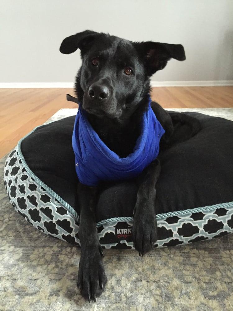 Cassie Cares Pet Sitting: Elmhurst, IL