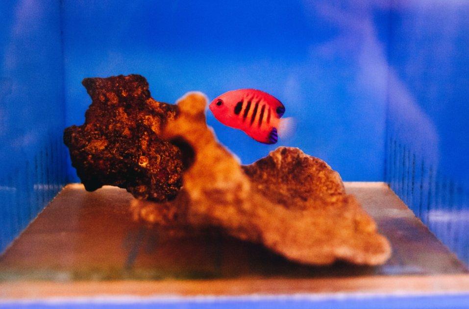 Aquarium arts 29 photos 41 reviews local fish stores for Pond plants mesa az