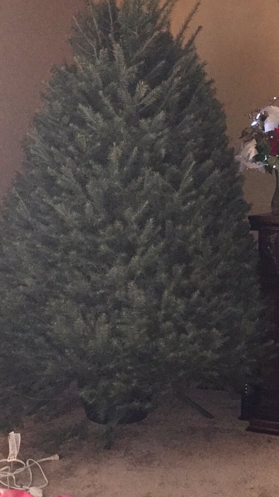Halabura Tree Farms: 35 Dreher Rd, Orwigsburg, PA