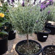 Photo Of Berridge Nurseries Phoenix Az United States Beautiful And They Smell