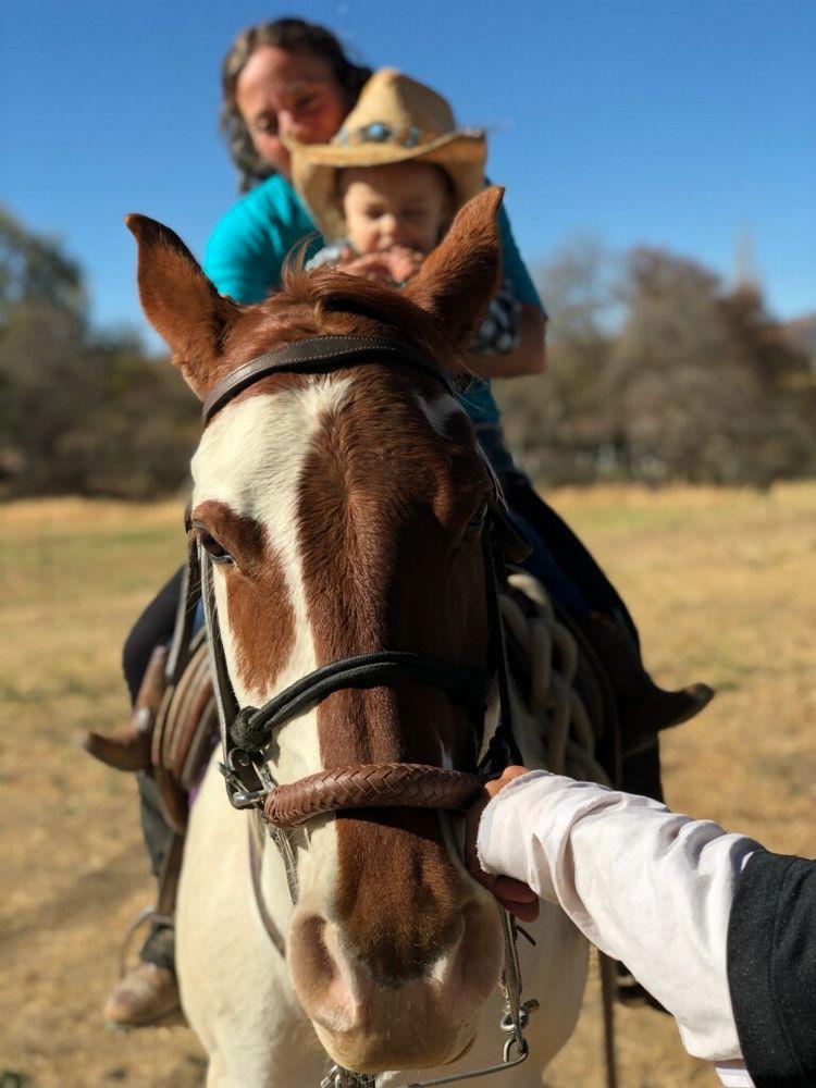 Ask The Horse Riding & Training: 20351 Tamarac Dr, Tehachapi, CA