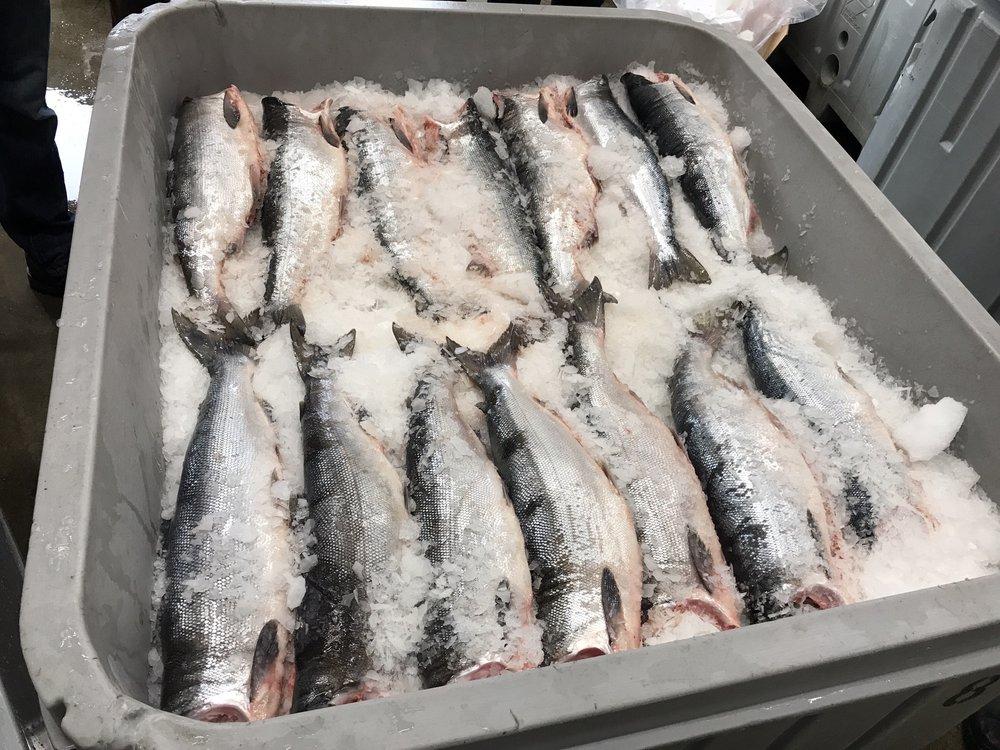 Barlean's Fish House: 4936 Lake Terrell Rd, Ferndale, WA