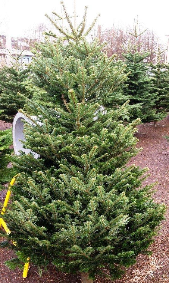 Cork Christmas Trees - 10 Photos