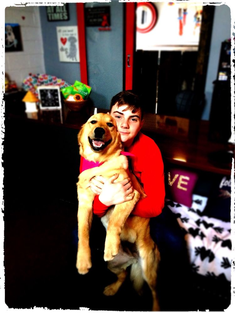 Puppy Love Socialization Center & Spa: 2221 Hilton Rd, Ferndale, MI