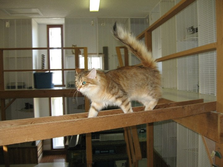 Calico Hills Kitty Lodge: 32, 51413 Range Road 262, Parkland County, AB