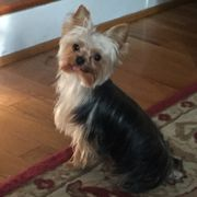 Dirty paws dog wash 15 reviews pet groomers 10217 southpoint she is photo of dirty paws dog wash fredericksburg va united states he always solutioingenieria Images