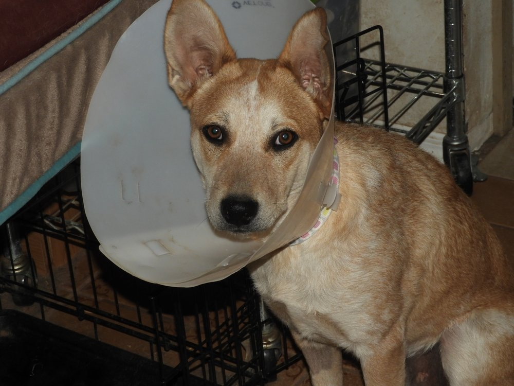 All Creatures Veterinary Service: 655 E 4th St, Benson, AZ