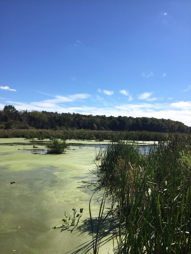 Vosburgh Swamp Wildlife Management Area: Coxsackie, NY