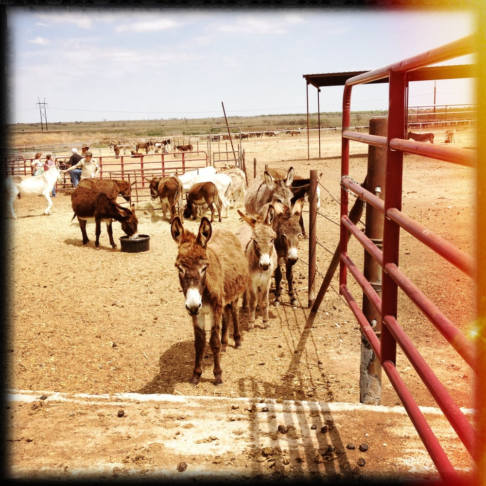 Peaceful Valley Donkey Rescue: 8317 Duckworth Rd, San Angelo, TX