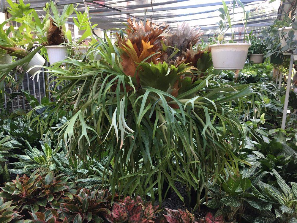 Vivero plantas de caparra gardeners 797 km 0 7 caguas for Viveros plantas en temuco