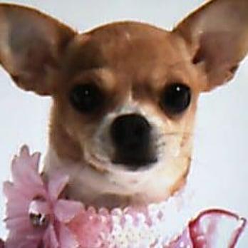 Small Dog Breeders Oahu