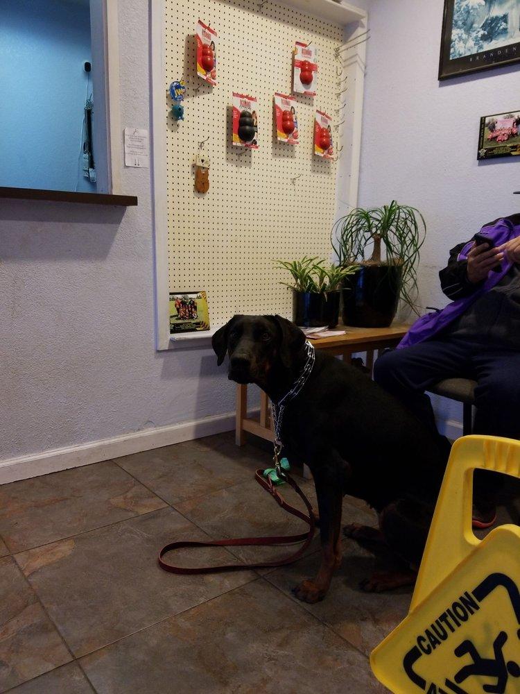 Elite Dogs Training & Boarding - 24 Photos & 86 Reviews