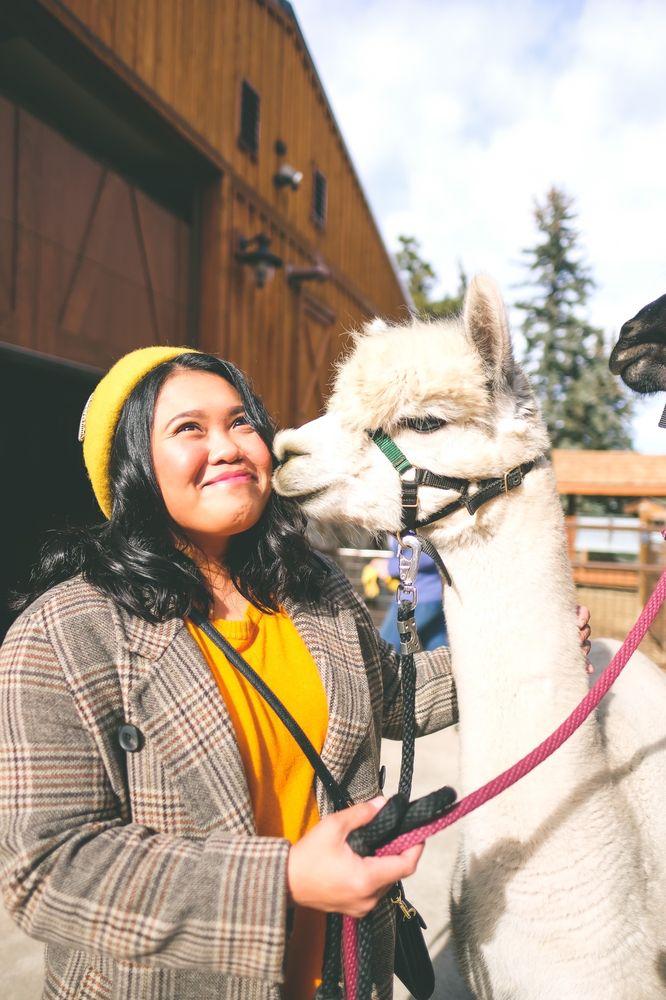 Red Fox Alpaca Ranch: 7542 Red Fox Dr, Evergreen, CO