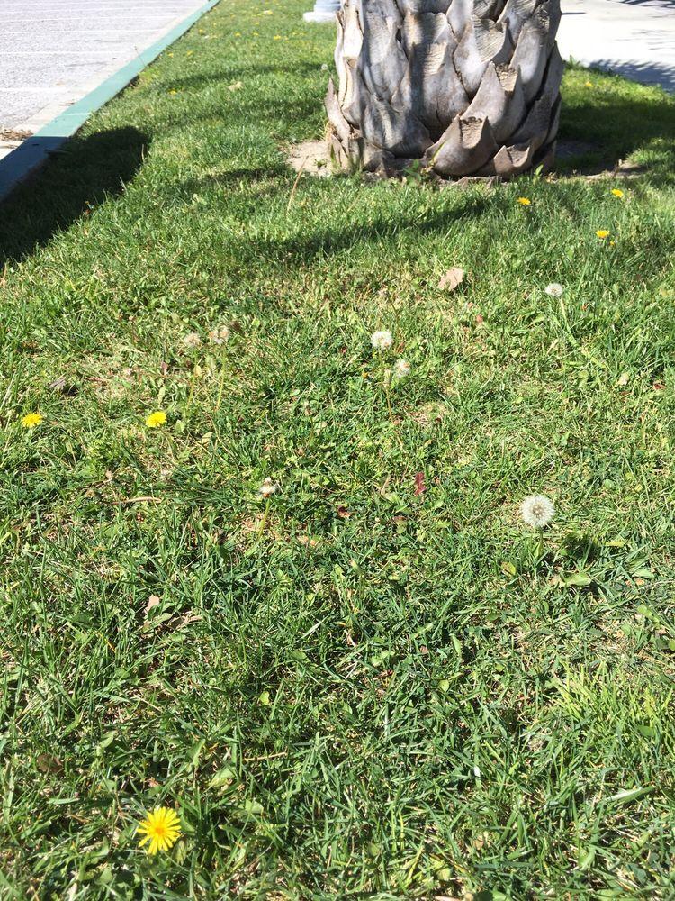 Weeds? I am the gardener pulling out dander lines google\