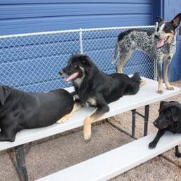 The Big Backyard - 24 Photos & 26 Reviews - Pet Sitting ...
