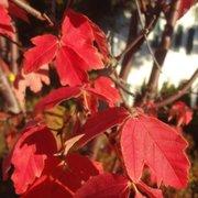 Hadley Garden Center   10 Reviews   Nurseries U0026 Gardening ...