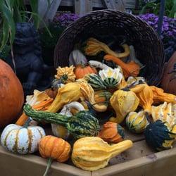 Johnson S Florist Garden Centers 40 Photos 10 Reviews Nurseries Gardening 5011 Olney Laytonsville Rd Md Phone Number Yelp