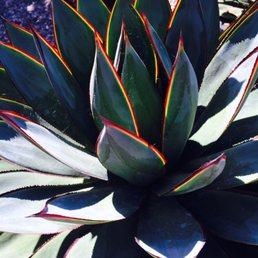 Photo Of Terra Sol Garden Center   Santa Barbara, CA, United States. Agave