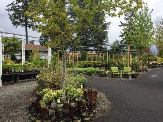 Shorty S Garden Center 10006 Se Mill Plain Blvd Vancouver Wa Florists Mapquest