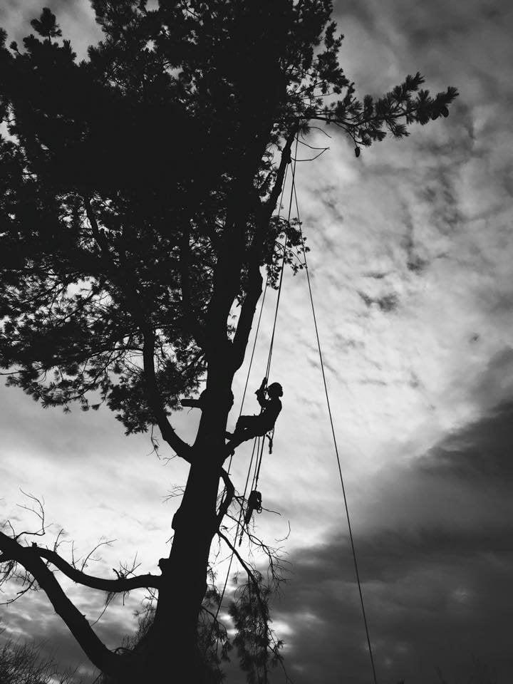Dominant Tree Service