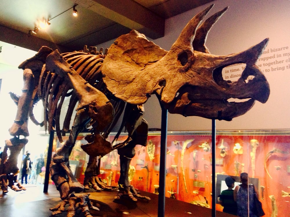 Restaurants Near The Natural History Museum Los Angeles