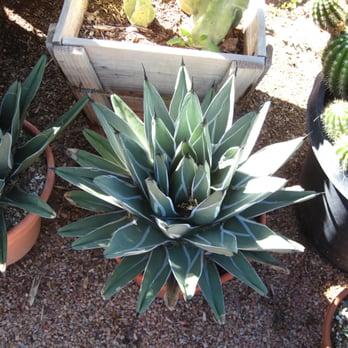 Photo Of P M Nursery Citrus Scottsdale Az United States