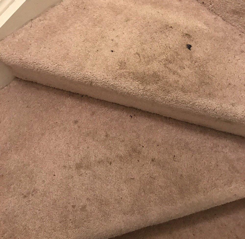 Albert's Carpet Cleaning