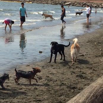 Photo Of Buchanan Dog Beach Albany Ca United States Made Friends Fast
