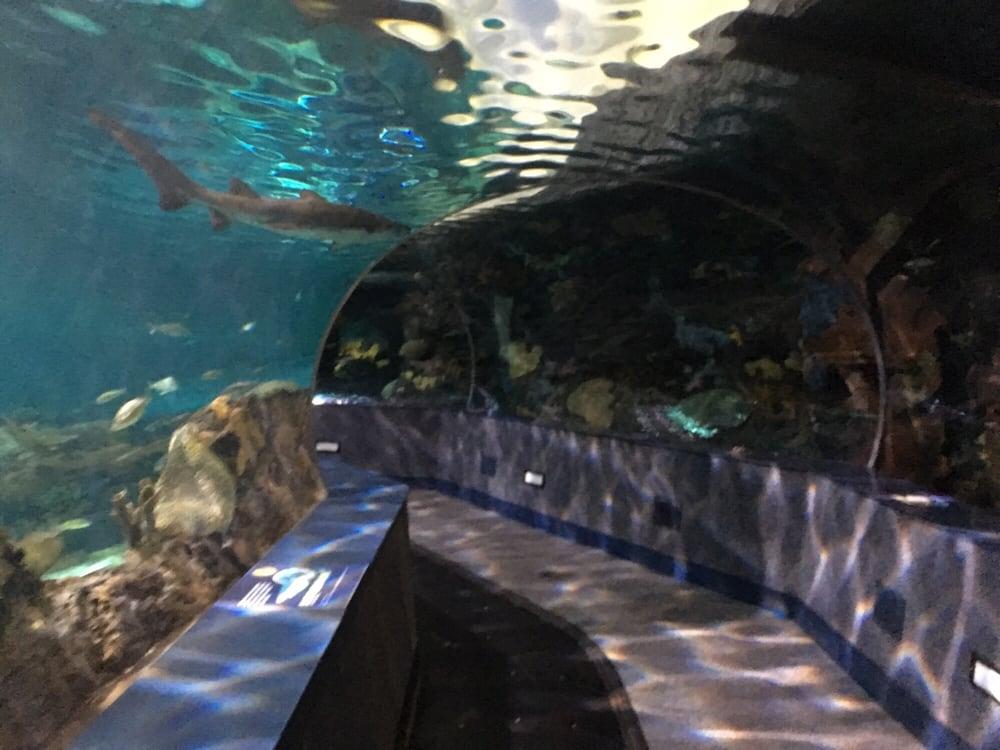 Photos For Ripley 39 S Aquarium Of The Smokies Yelp