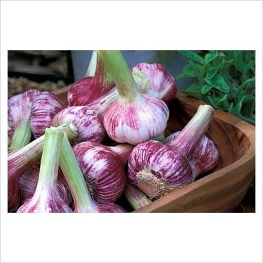 Los Olivos Homegrown Gourmet Garlic: 2963 Grand Ave, Los Olivos, CA