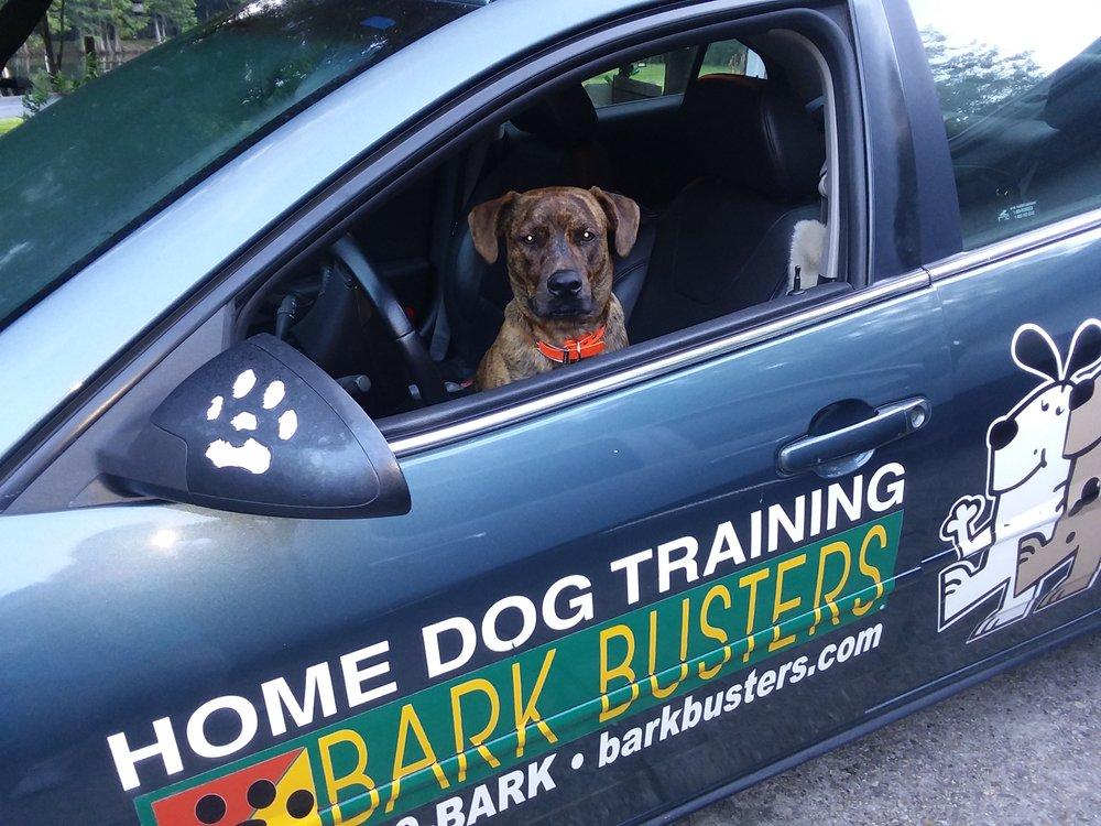 Bark Busters Home Dog Training Gulf Coast: Gulfport, MS