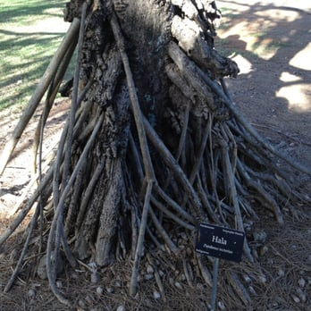 Photo Of Maui Nui Botanical Gardens   Kahului, HI, United States. Weird  Roots