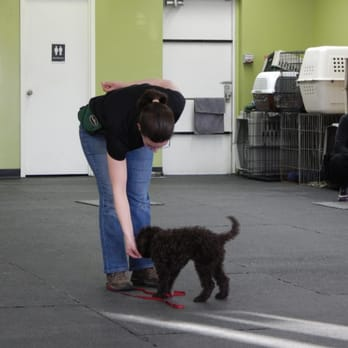 Dog Training Ottawa St Laurent