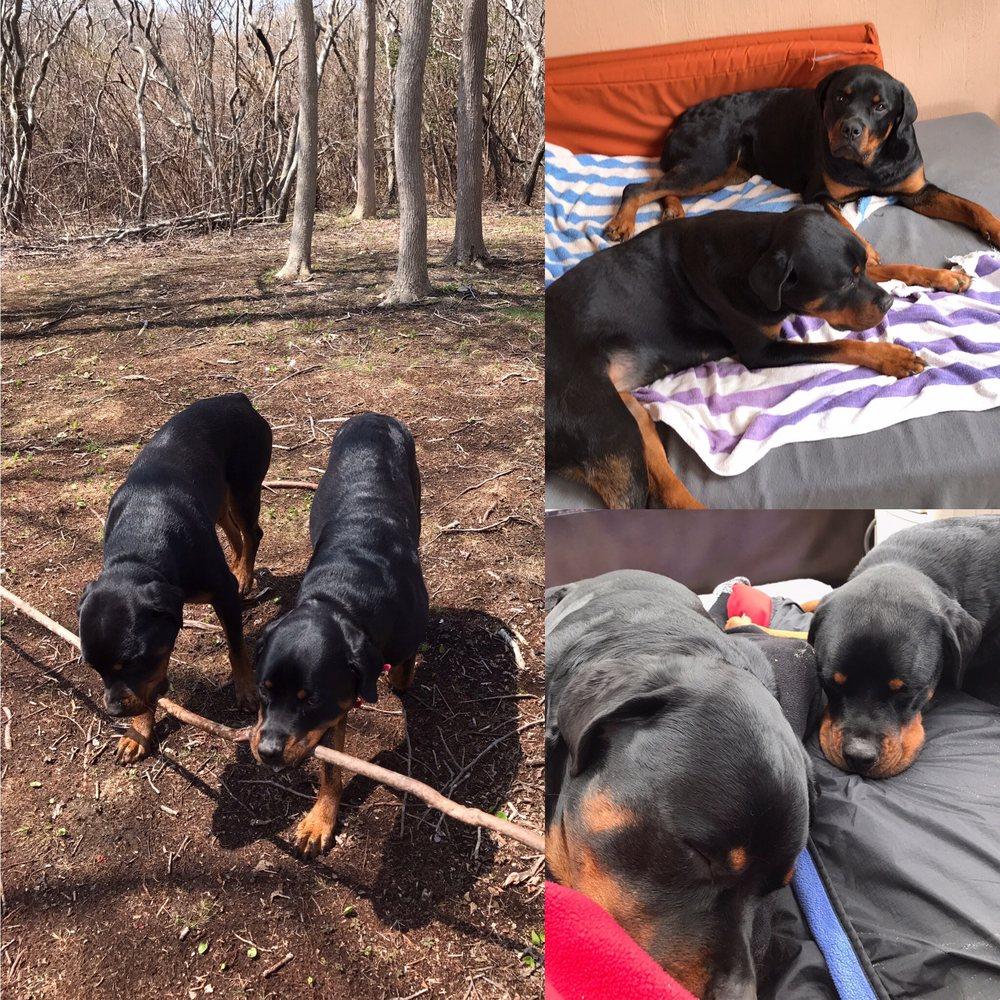 Refined Canines Dog Training: Ridge, NY