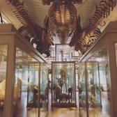 Harvard Museum Of Natural History Gift Shop