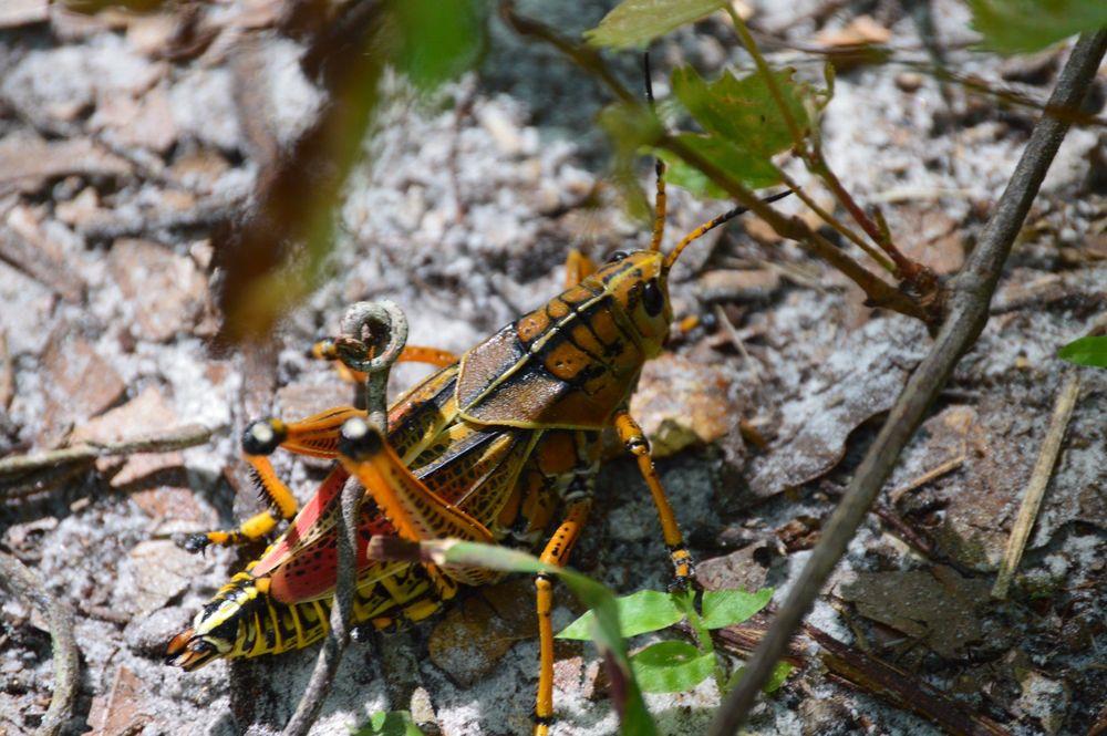 Hillsborough River State Park: 15402 N US Hwy 301, Thonotosassa, FL